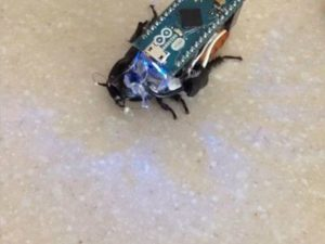 Control a Cockroach with Arduino for under $30 – Hackster.io