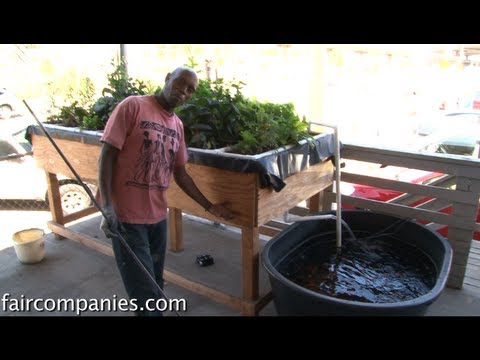 Internet of food: Arduino-based, urban aquaponics in Oakland – YouTube