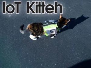 PI cat monitoring device