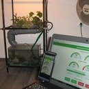IoT NFT Aquaponic System Controler with WebApp (Intel Edison & Node.js)