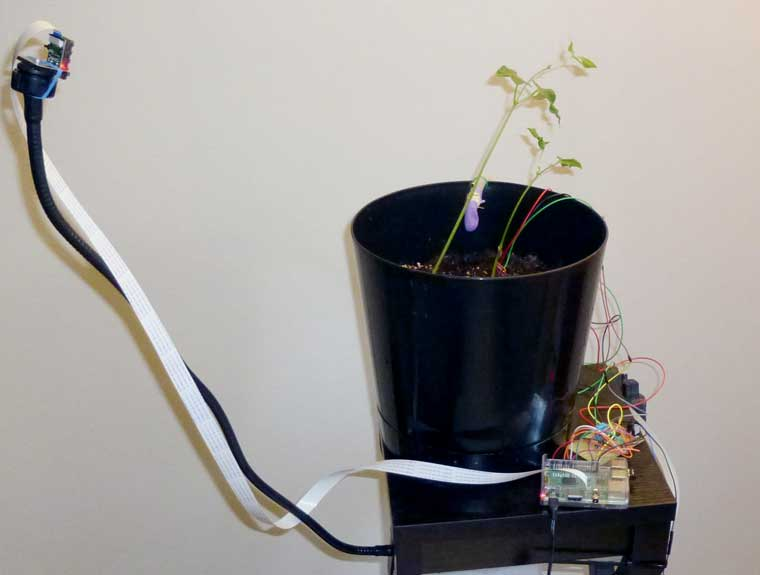 GreenPiThumb: A Raspberry Pi Gardening Bot