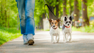 Avoid these mistakes for better Dog Walking Business  This blog will help people understand how  ...