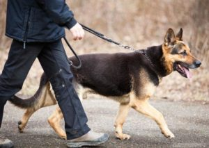 Help your Customers to get professional dog walkers with Dog walking app  Why one should get a d ...