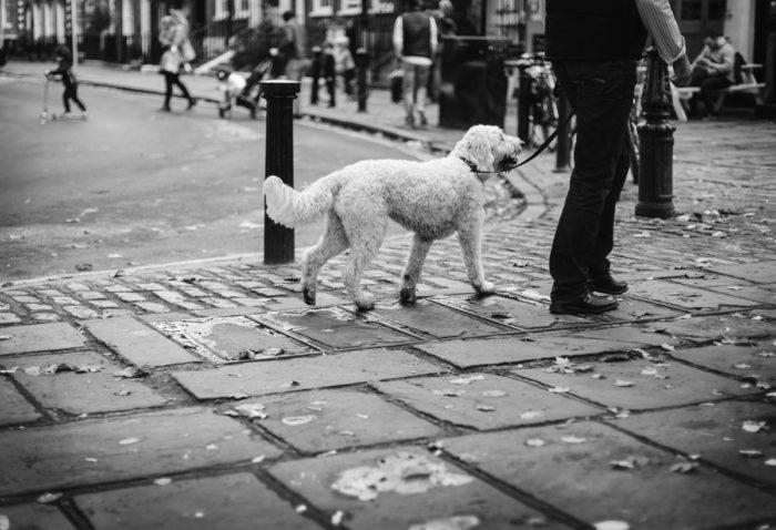 Dog walker on-demand app