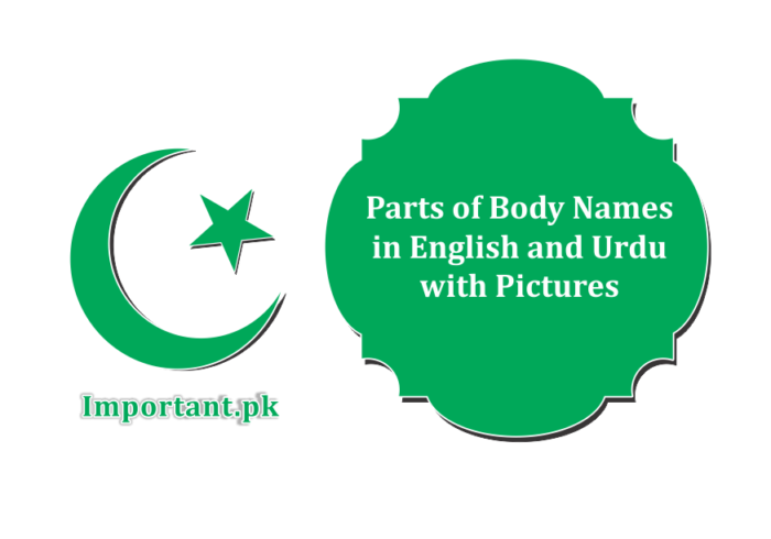 Parts Of Body Names In English Urdu PDF With Pictures