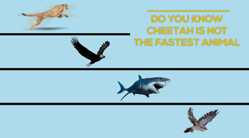 Updated List of Fastest Animals in the World 2020 – The News Engine