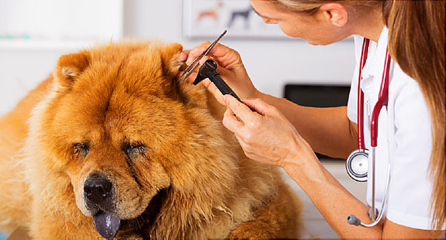 Understanding Different Types of Vets and Their Services
