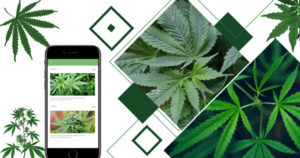 Everything to know about the development of Uber for cannabis delivery app With more than 147 mi ...
