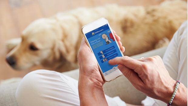 Vets in Cork Treat Parasites | The Pet Parents' Alarm Guide